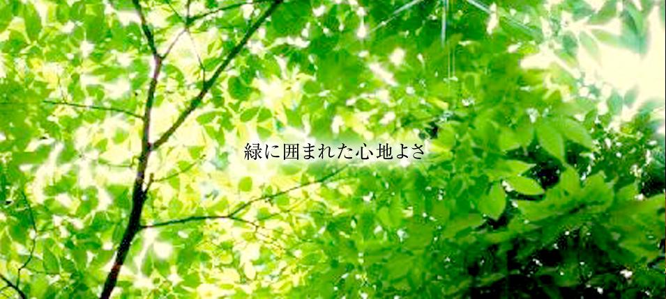 緑に囲まれた心地よさ